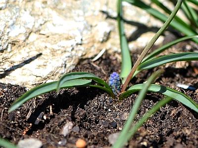 Die kleine blaue Blume schenkt Hoffnung.