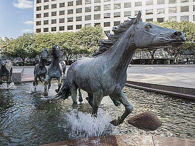 Der Mustang und sein Drang nach Freiheit