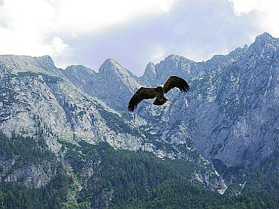 Der  Adler - weiser König der Lüfte