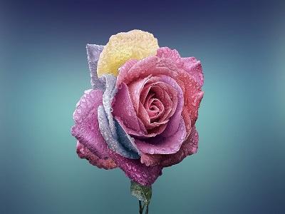 Eine bunte Blume