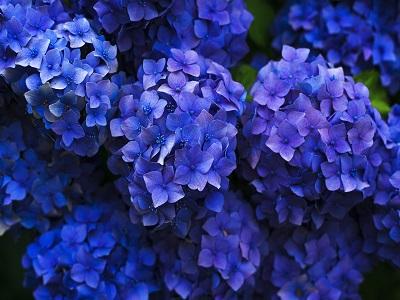 Blumen verschönern das Leben